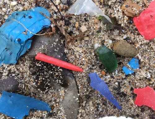 Waves of Waste Beach Clean