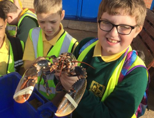 Year 6 Harbour Visit